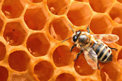 Мед для лечения гайморита