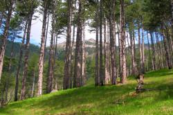 Нахождение на свежем воздухе при незапущенных случаях заболевания