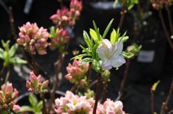 Цветение растения-причина аллергии