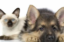 Домашние животные-причина аллергической реакции
